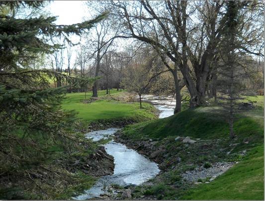 Picturesque brook through trees.