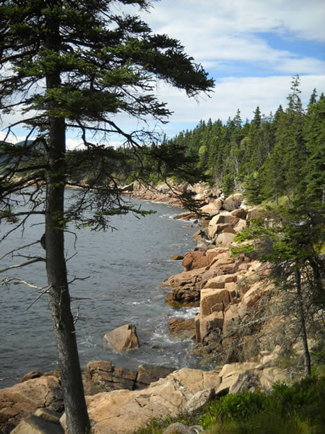 rocky shore with pine tree in foreground