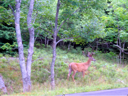 deer at side of road, solo travel to canada