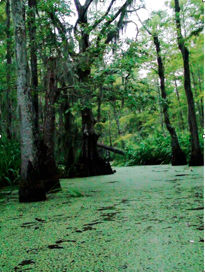 Swamp outside New Orleans