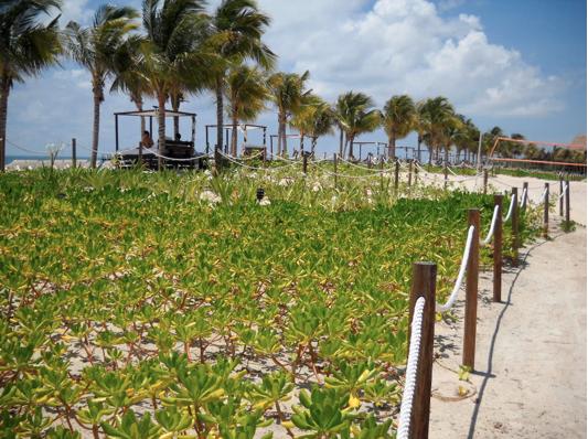 Hacienda Tres Rios beach plants
