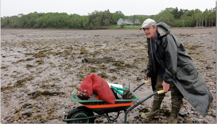 Clam digger and wheel barrow