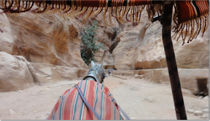 Horse and cart in Petra