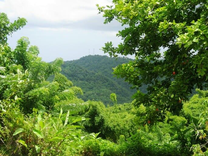 photo, image, breadfruit, mountain, jamaica