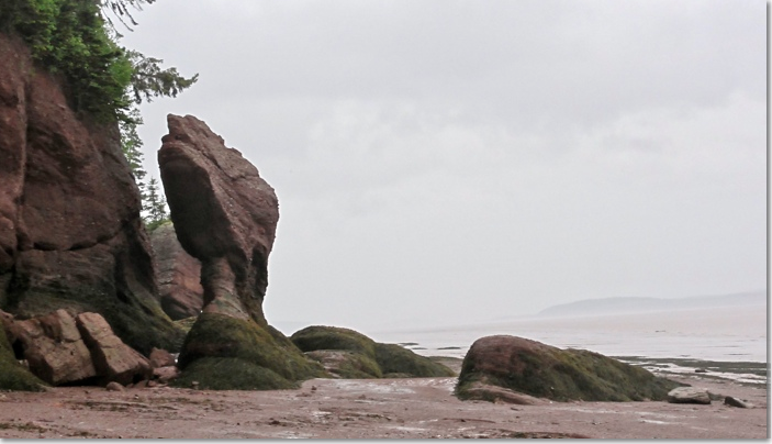 The Hopewell Rocks dinosaur