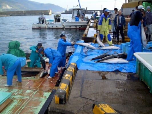 photo, image, fisherman, uchinoura, wwoofing