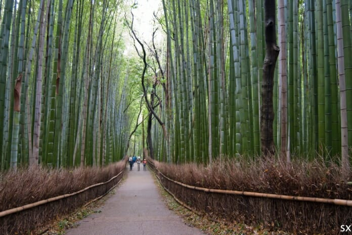 photo, image, bamboo forest