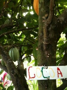 Grenada: Sweet Spice, Flammable Rum & a Frisky Monkey