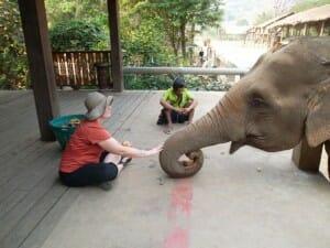 Betsy Elephant Park
