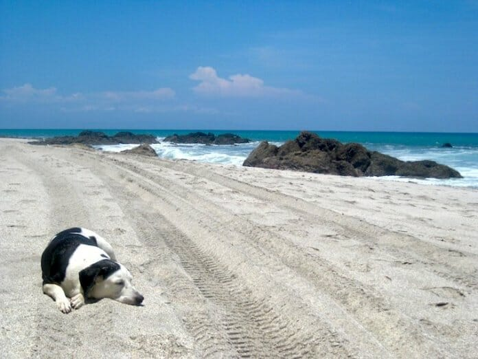 photo, image, beach, dog, montezuma