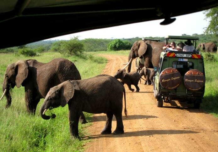 photo, image, elephants