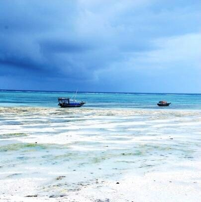 photo, image, boats, zanzibar