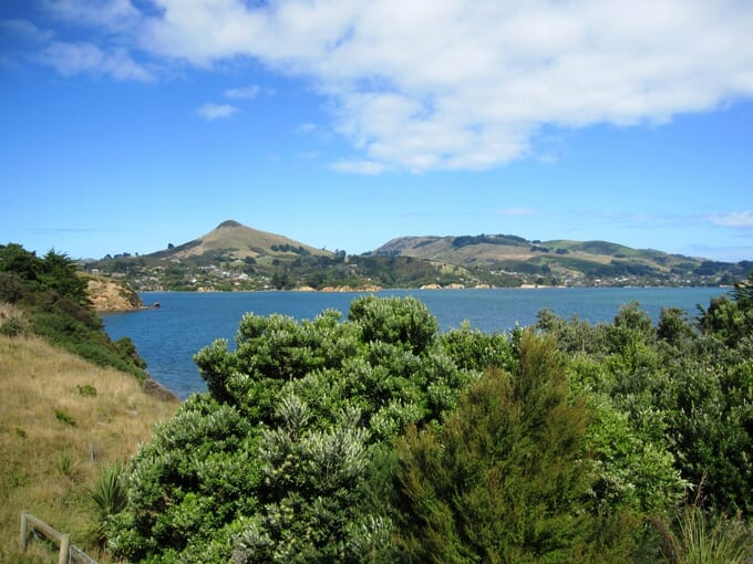 photo, image, otago harbour