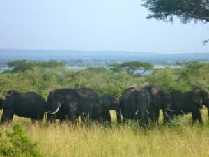 Solo Travel Destination: Uganda