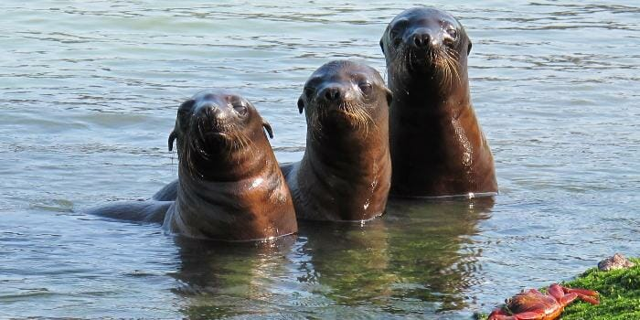 photo, image, sea lions