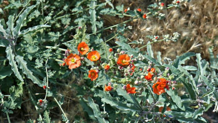 The Arizona wild flowers are beautiful.