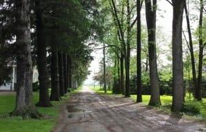 photo, image, trees, lane