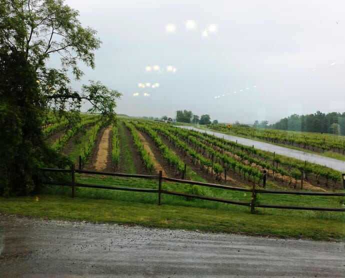 photo, image, grapevines, dr. frank's, finger lakes