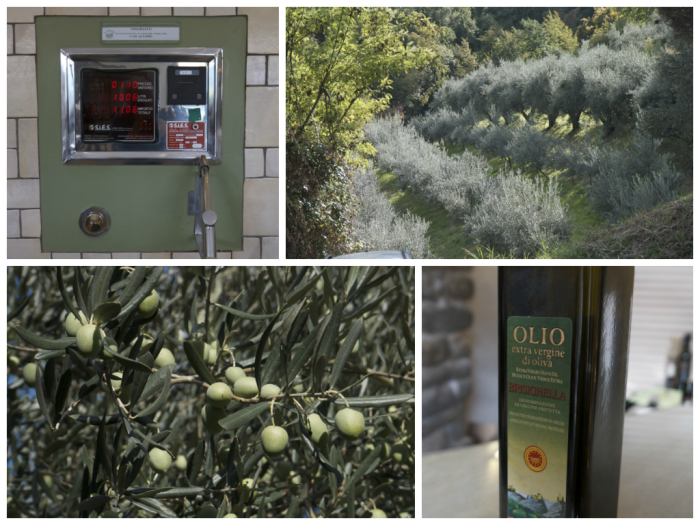 Glorious olive oil - from upper left and clockwise: a pump station where you can buy olive oil for your own container, an olive tree grove, the bottle of olive oil that I purchased and a close-up of olives on the tree.
