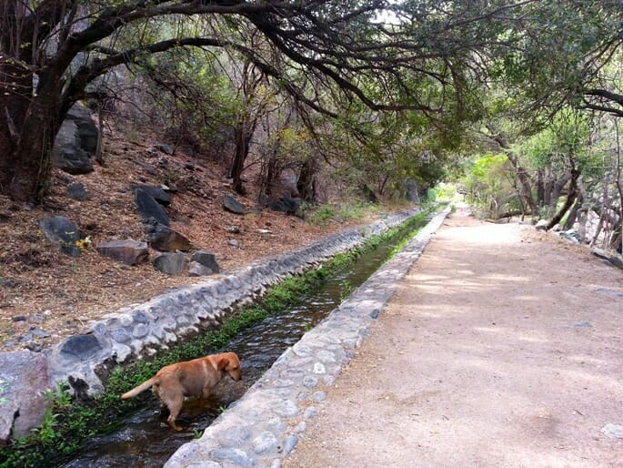 photo, image, dog, rio san carlos