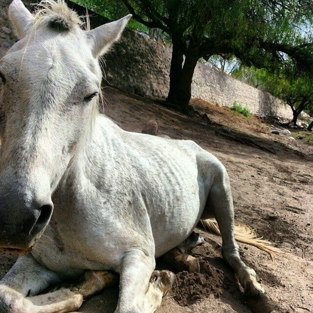 photo, horse, argentina