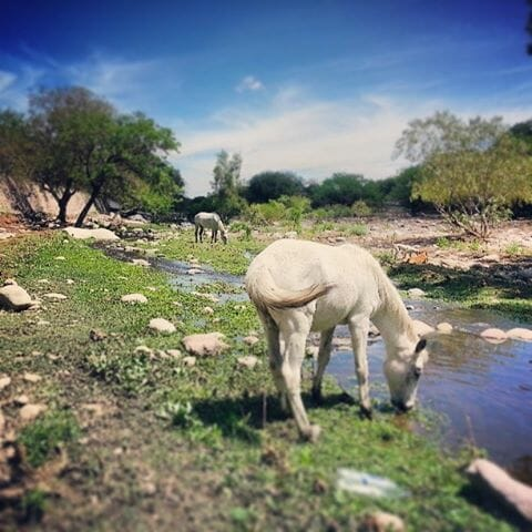 photo, image, horses, rio san carlos