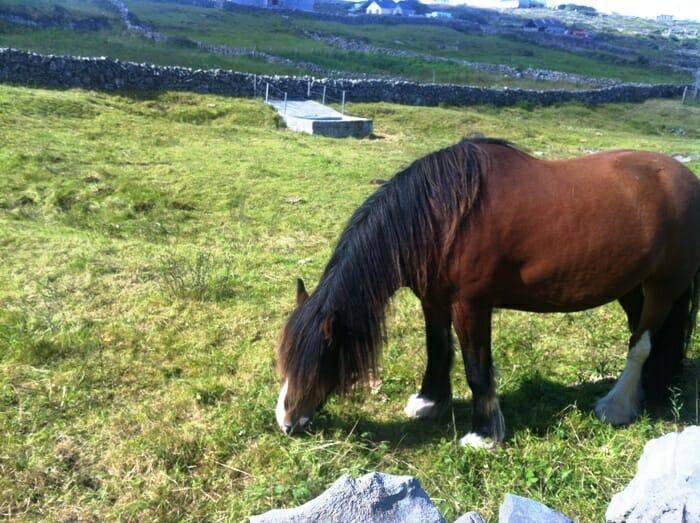photo, image, horse, aran islands