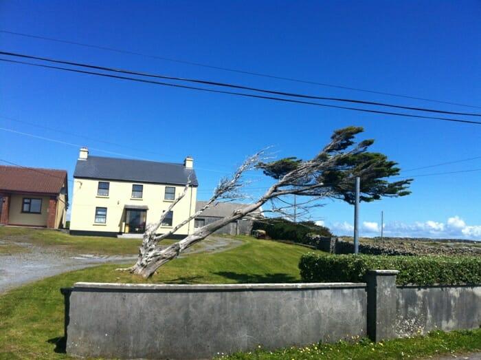 photo, image, leaning tree, aran islands