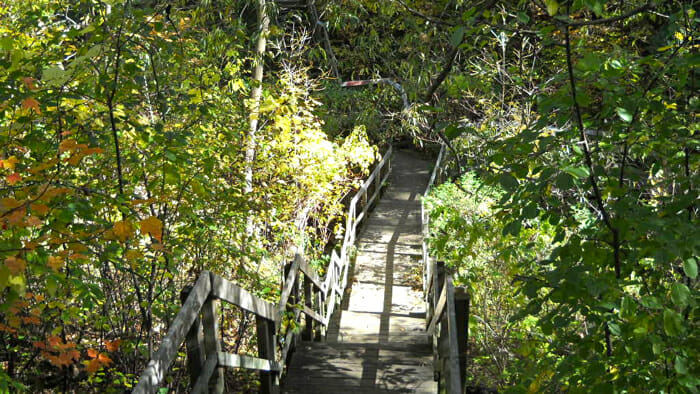 A micro-vacation destination can simply be a hike in a nearby woods. trip planning