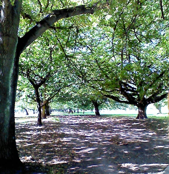 photo, image, Hagley Park