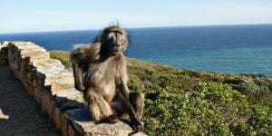 Solo Travel Destination: Cape Town, South Africa