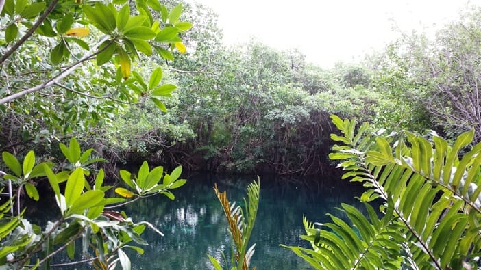 photo, image, cenote