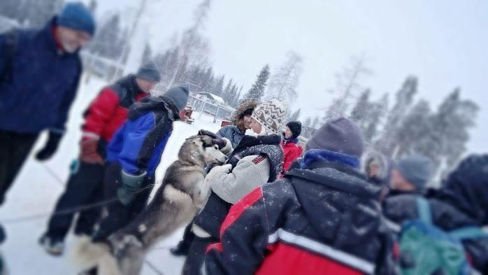 photo, image, husky, finland, muonio