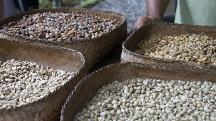 Coffee Beans, Cantik Agriculture, Luwak Coffee, ubud