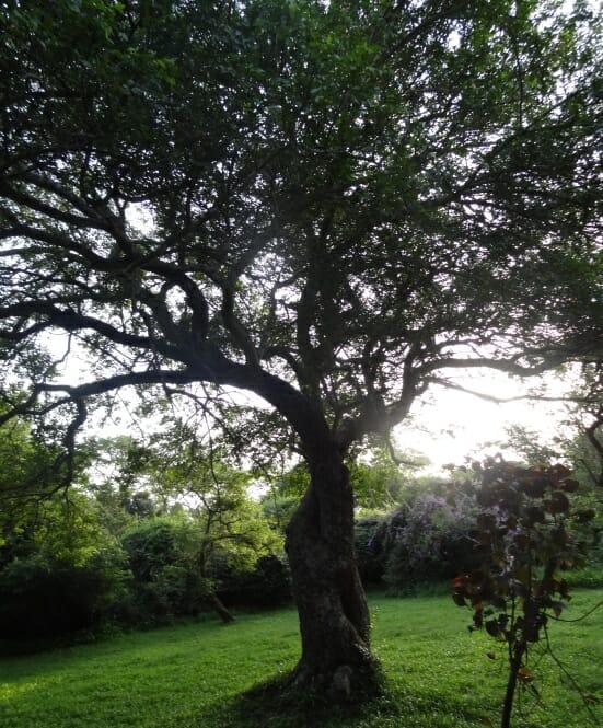 photo, image, tree, uganda