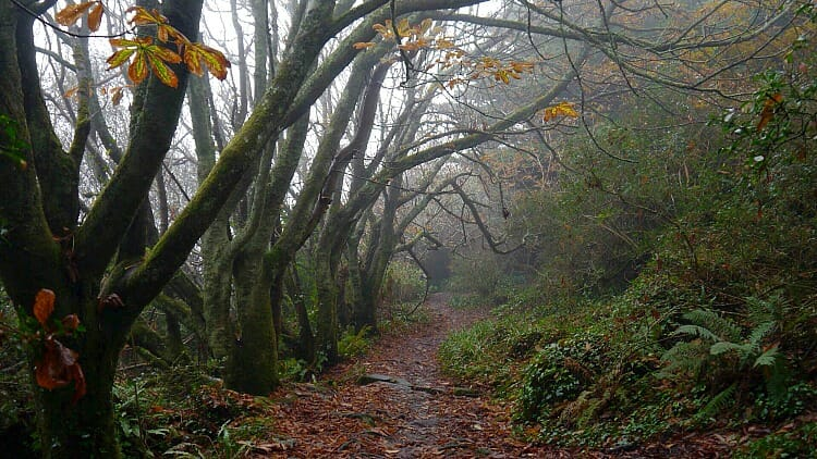 photo, image, south west coast path, woods, slow solo travel