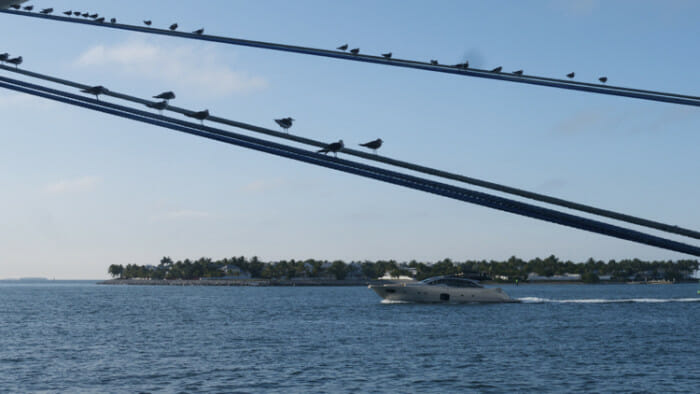Once side of Key West faces the Atlantic and one side the Gulf of Mexico. Silhouette of birds on the mooring lines on a cruise ship at Mallory Square with the Gulf of Mexico in the background.
