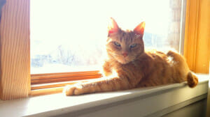 Hello Charlie! 5 Solo Travel Safety Skills from My Cat