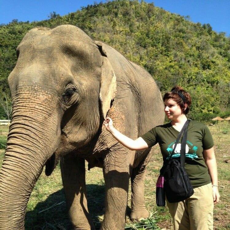 photo, image, elephant nature park, thailand