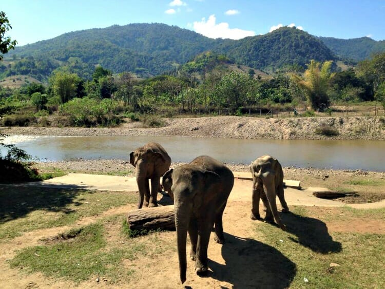 photo, image, elephant nature park, chiang mai, thailand