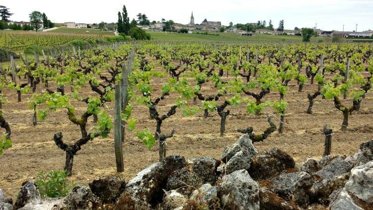 photo, image, vineyard, importance of flexibility