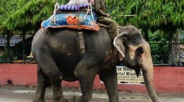 Solo Travel Destination: Sauraha, Nepal