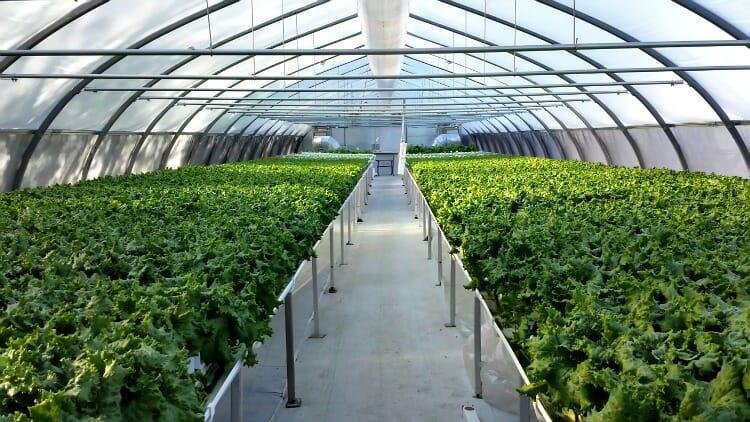 photo, image, greenhouse, l'eden rouge, abitibi