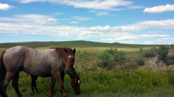photo, image, ponies, little bighorn