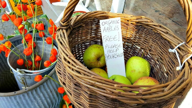 photo, image, apples, hay-on-wye