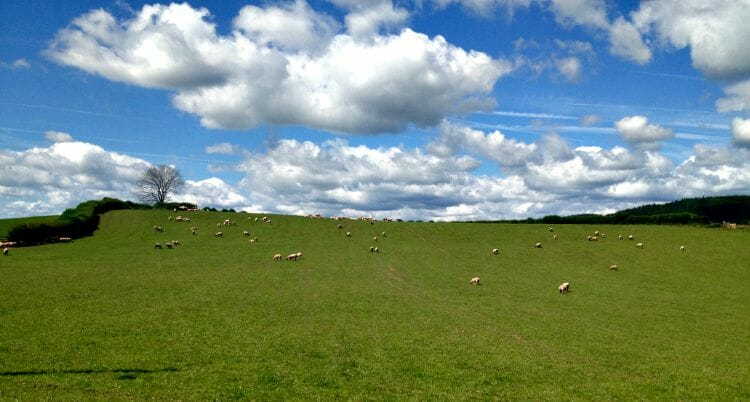photo, image, sheep, hay-on-wye, wales