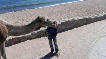 photo, image, kissing camel, egypt