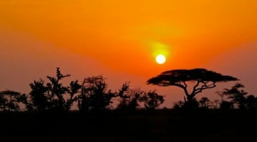 photo, image, serengeti, sunrise, africa
