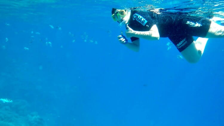 photo, image, snorkelling, great barrier reef, cairns, australia