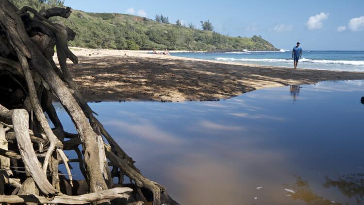 Oh I love Kauai. This is Moloa'a Beach.